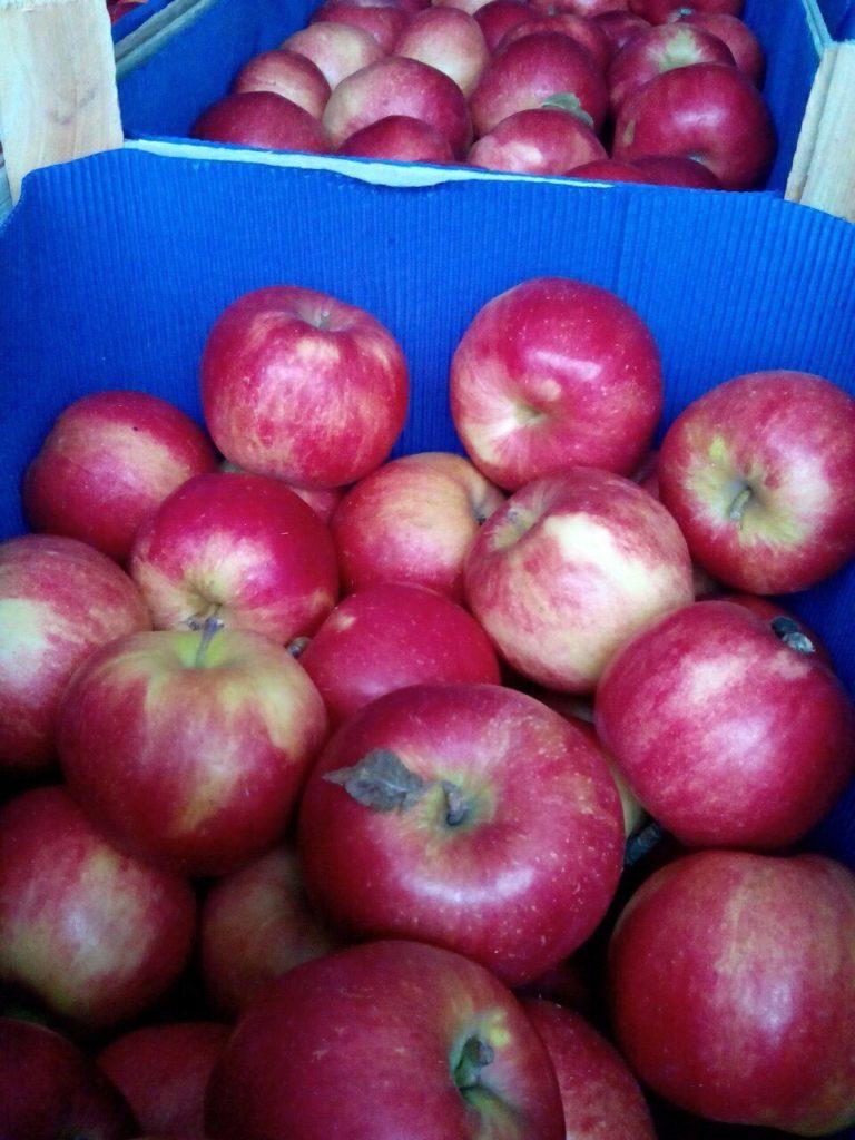 Выращивание яблок в 53