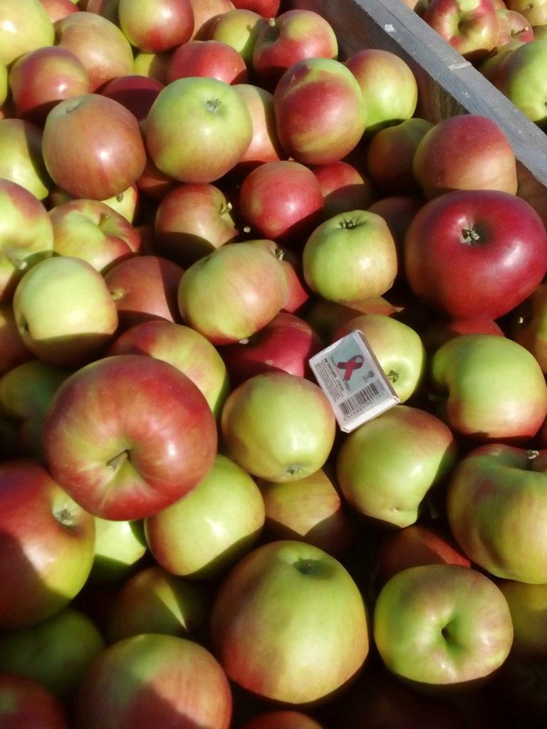 сорта яблок для беларуси в картинках сформировано