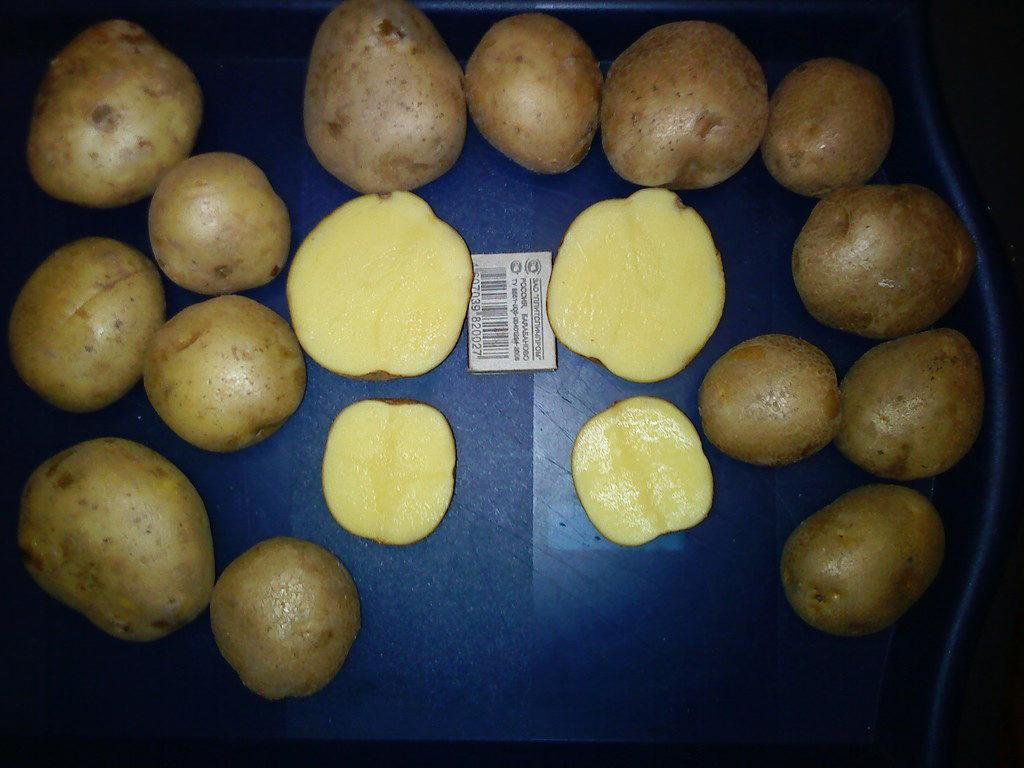 что картофель венета описание сорта фото всегда пригодится, крестовая